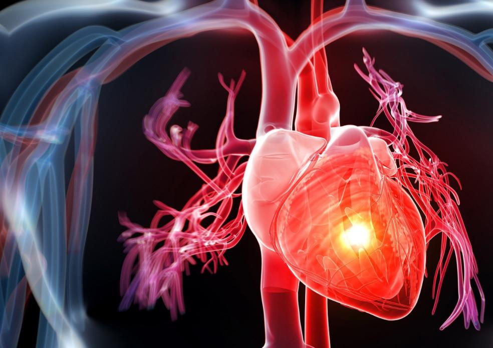 các chất có tron giấm chuối rất tốt cho hệ tim mạch